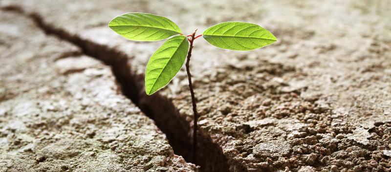 Neue Ideen reifen heran aus kleinen Pflanzen